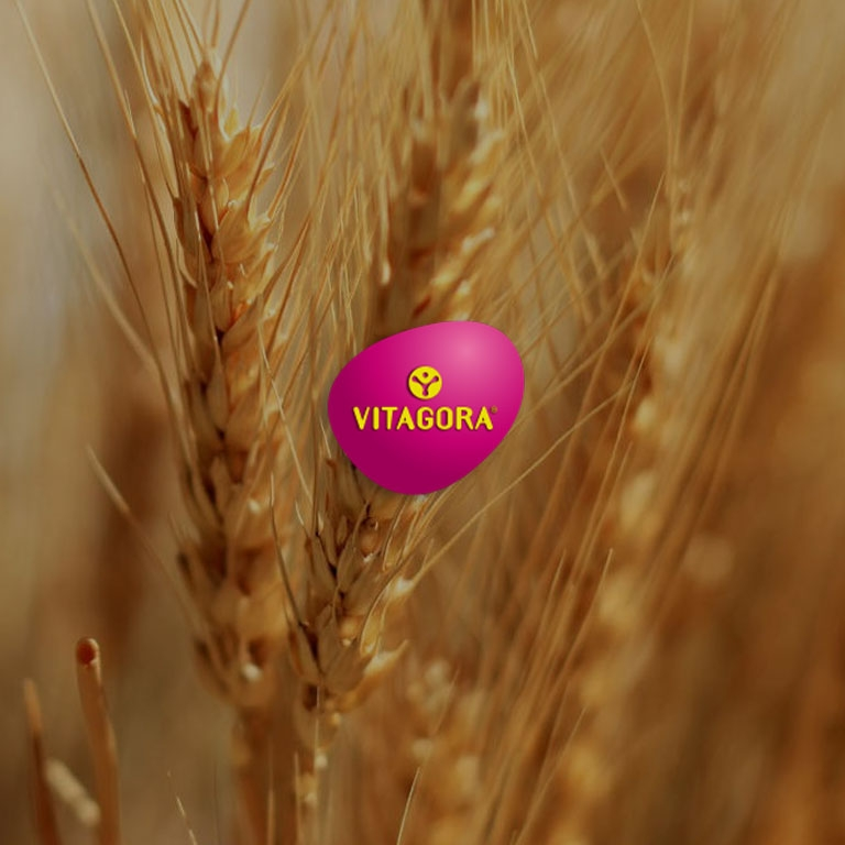 visuel-vitagora-12.jpg